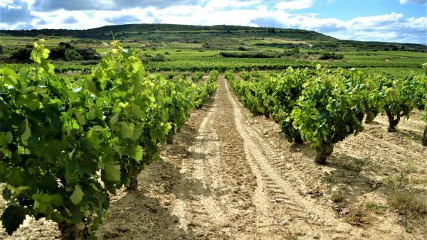 Los ingresos por enoturismo crecerán un 25% en Rioja en los próximos cinco años, según Turismodevino.Com