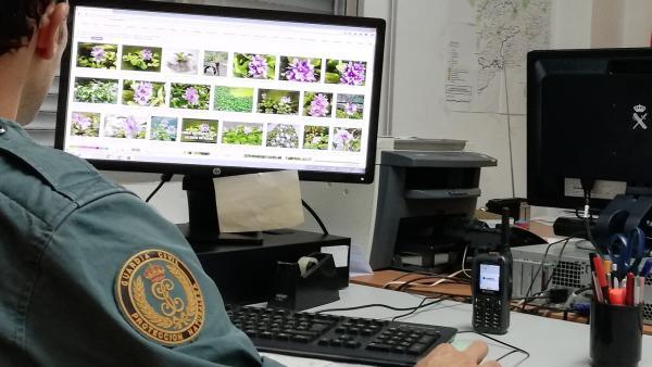 Intervenidos en Gondomar (Pontevedra) unos 200 ejemplares de plantas exóticas, a la venta en Internet