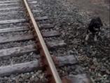 Perro atado a las vías