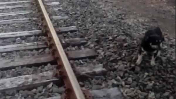 Detiene un tren para salvar a un perro encadenado a la vía