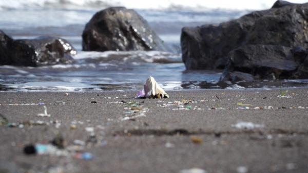 Casi el 60% de las playas canarias, afectadas por el plástico, según un estudio de Loro Parque Fundación