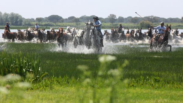 La III edición de Doñana Natural Life inicia sus actividades recreando la Saca de las Yeguas