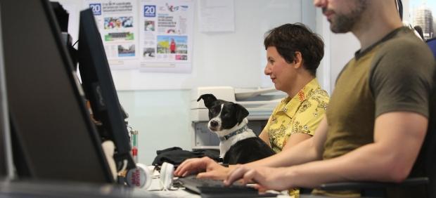Día del Perro en la Oficina