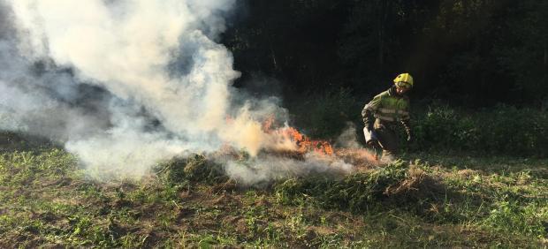 Un bombero de la Generalitat quema una plantación de marihuana en el Alt Empordà (Girona) en el marco de una operación de Mossos d'Esquadra.