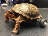 Pedro, la tortuga