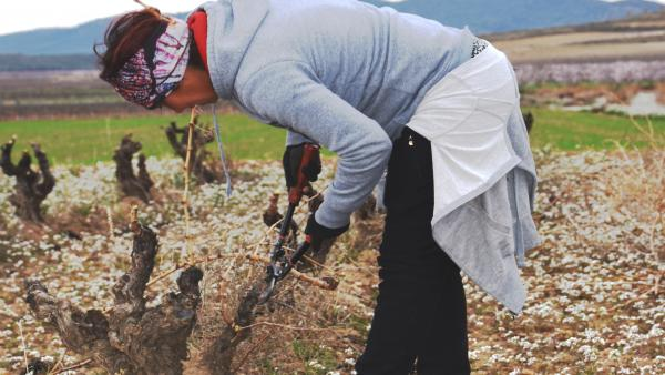 Incorporación de jóvenes agricultores