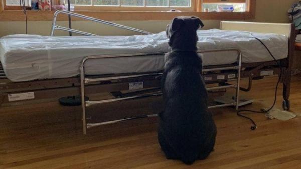 Moose espera junto a la cama de su dueño