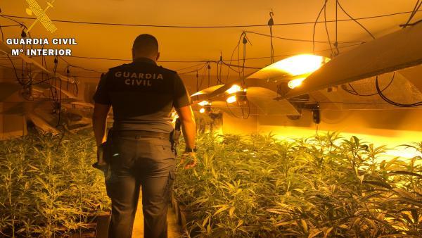 Marihuana incautada en Camarena (Toledo)