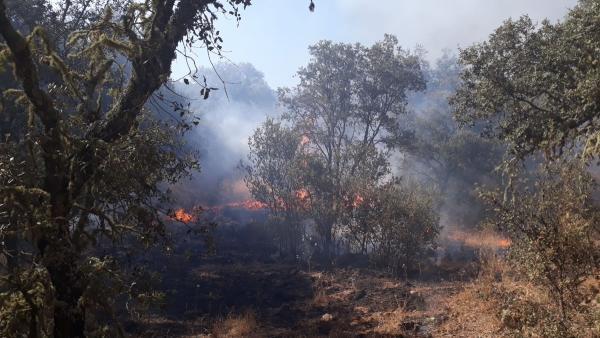 Incendio en Villaviciosa de Córdoba