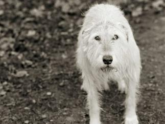 Animales que fueron rescatados de granjas y han podido envejecer