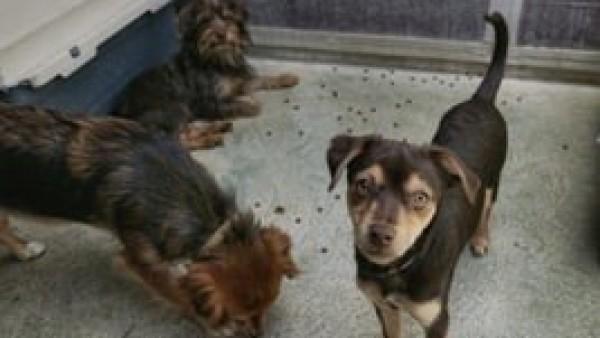 Rescatan a 18 perros en malas condiciones y abren procedimientos a sus propietarios