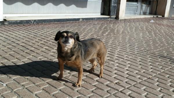 Perro, mascota, animal