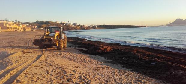Retirada de algas en la playa de Getares en Algeciras