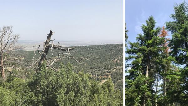 Investigadores liderados por la UPO descubren un nuevo método de alerta temprana del decaimiento forestal