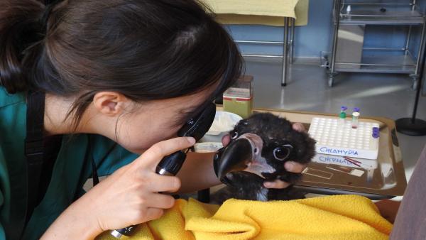 Una veterinaria con uno de los buitres del programa