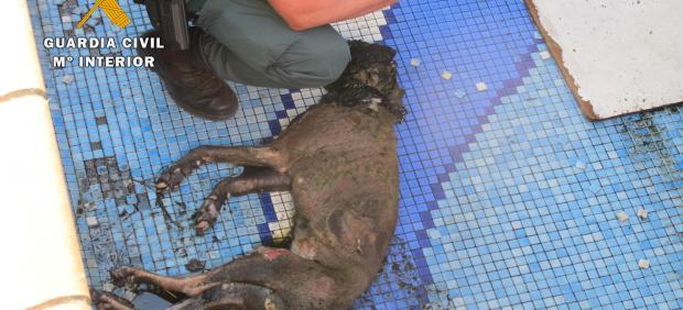 Perro hallado muerto en Vegas del Genil (Granada)