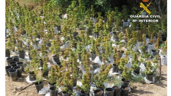 Plantación en El Campello