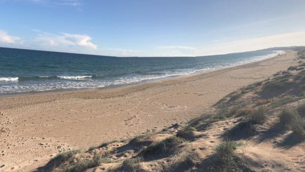 Cierran al baño tres playas en Alicante tras la mordedura de un pez a dos niños