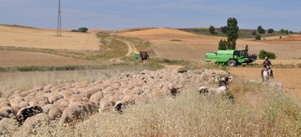 La dispersión de semillas por el ganado y los polinizadores mejora la diversidad genética de las plantas