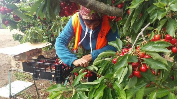 El Gobierno de Aragón abre la convocatoria de ayudas para mejorar las condiciones laborales de los temporeros