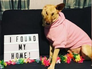 Maggie, la perrita ciega y embarazada que fue abandonada llena de heridas, ahora es 'instagramer'