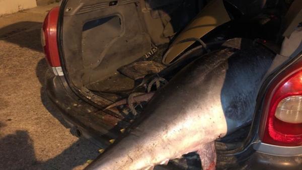 Atún rojo pescado de manera ilegal en Tarifa