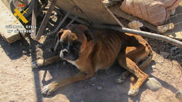 Uno de los perros intervenidos.