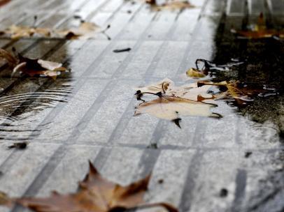 Imagen de recurso de hojas caídas por el otoño en Madrid.