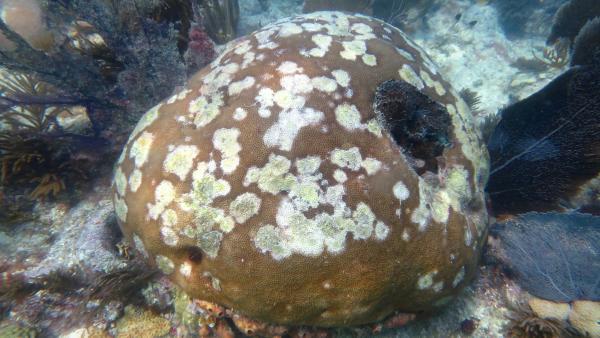 Corales México