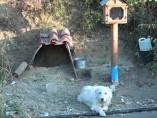 Un perro espera en la curva donde se mató su dueño
