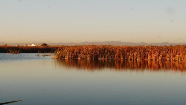 Medi Natural assenyala que al maig va baixar el nivell d'aigua de l'Albufera però ara està dins de la normativa