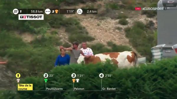 Una vaca en el Tour de Francia 2019
