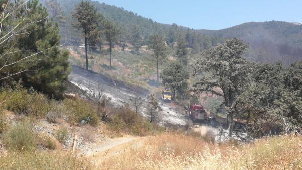 Trabajos de retenes del Infoex en el incendio en Torrecilla de los Ángeles