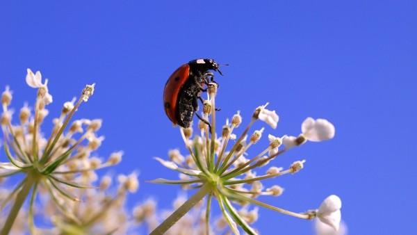 Mariquita, naturaleza, medio ambiente