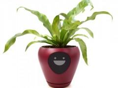 Lua, la maceta inteligente que convierta tu planta en una mascota