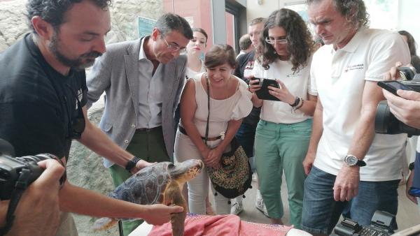 Suelta de una tortuga boba tratada en el Centro de Recuperación de Especies Marinas Amenazadas