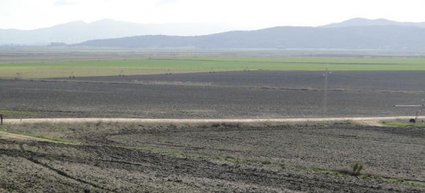 Terrenos de la desecada laguna de La Janda