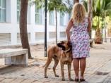 Perros como terapia para víctimas de violencia de género.