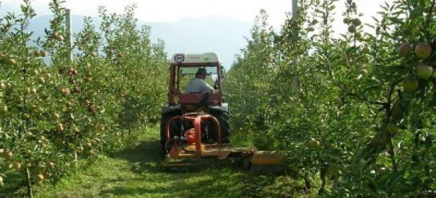 Explotación agrícola, árboles frutales