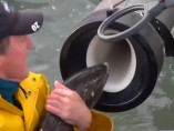 El 'cañón de salmón', un tubo por el que viajan los peces para sortear una presa de agua