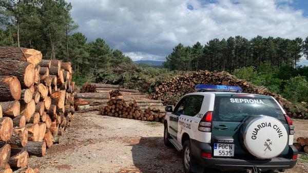Una persona detenida y 14 investigadas de una organización desarticulada por comercializar madera infectada en la provincia de Pontevedra.