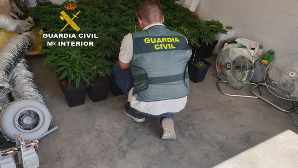 Plantación requisada en Osuna (Sevilla)