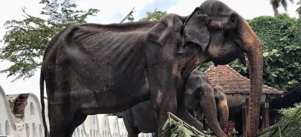 Elefante maltrato
