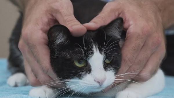 La Audiencia de Valladolid revoca la sentencia que condenó a un hombre por dejar escapar el gato de su expareja