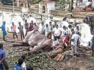 La elefanta Tikiri