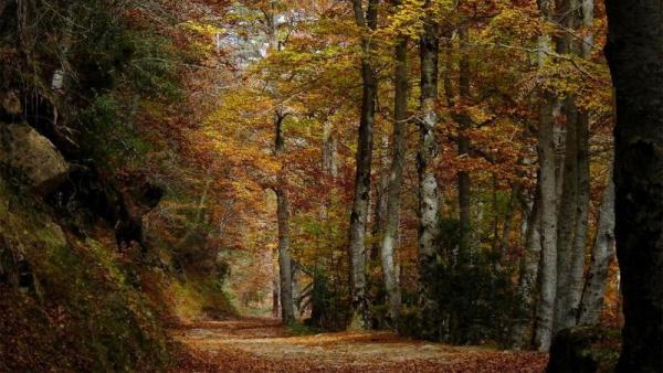 El Gobierno de La Rioja organiza la actividad El Bosque Mágico que Cuenta Historias, en La Blanca, dentro de Sierra de la Cebollera