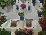 Un típico patio cordobés