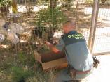 La Guardia Civil rescata a seis cachorros enterrados vivos en Teruel.