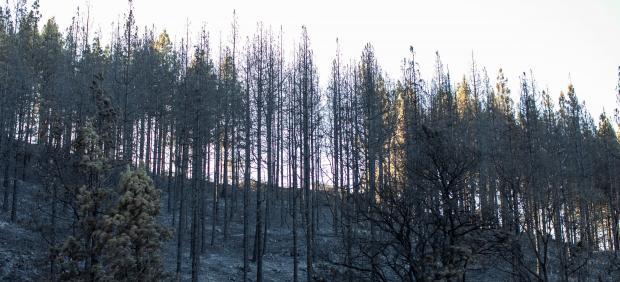 Barranco Los Pajaritos, en Gran Canaria, arrasado por el fuego