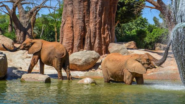 El Bioparc reunirà experts de tot el món per a parlar de la conservació de la natura